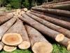 lumber_shutterstock_75694408